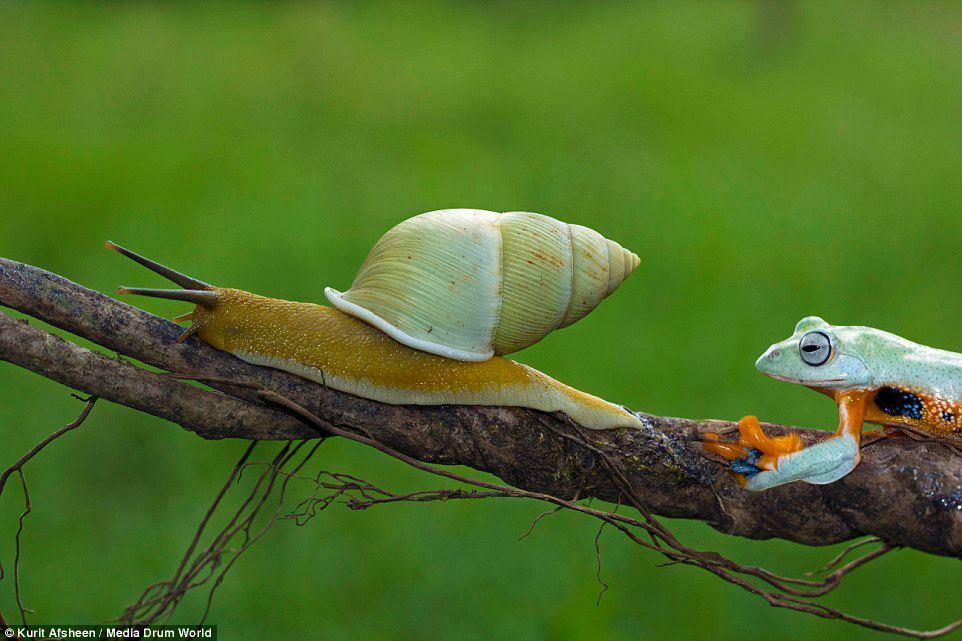 Rana y caracol 1