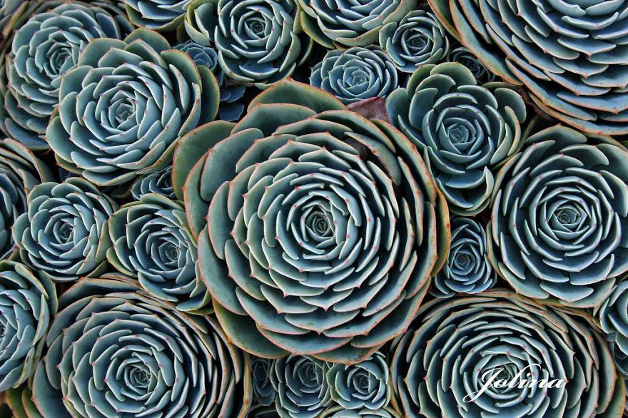 fractal 8
