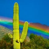 Brillante arcoiris
