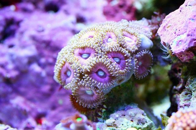 Corales 6