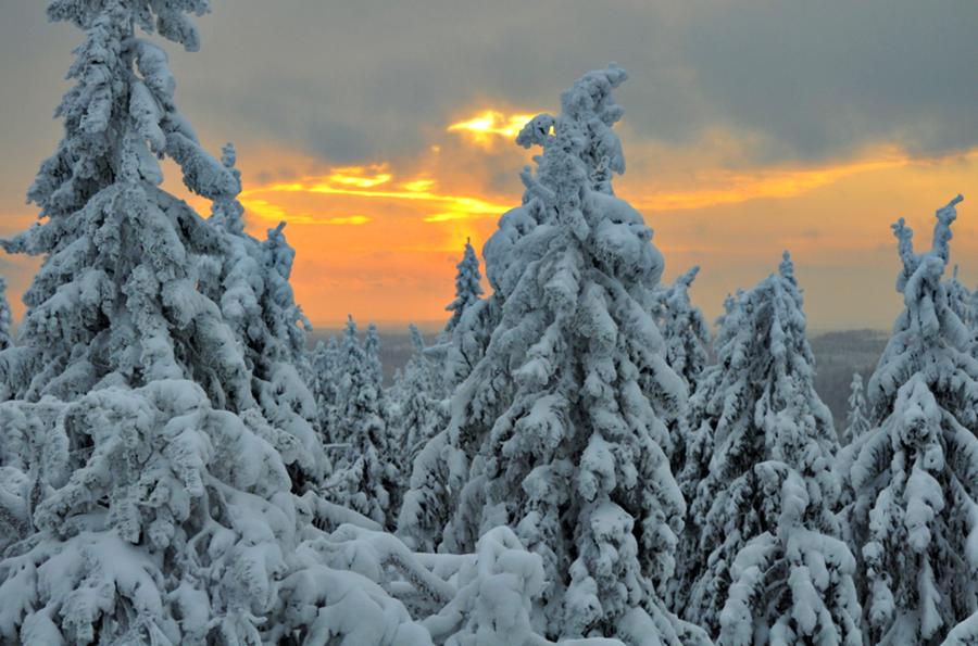 Bosque nevado 2