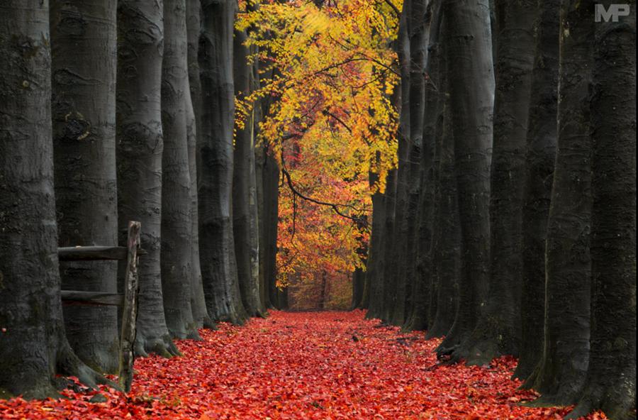 ¿Sabían esto sobre el color de las hojas en otoño?
