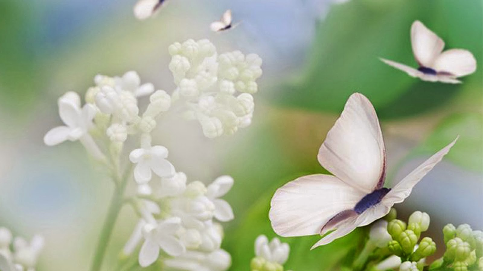 290969-1600x900-Butterflies-and-pretty-Flowers