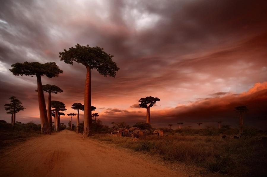 Baobabs de Madagascar 3