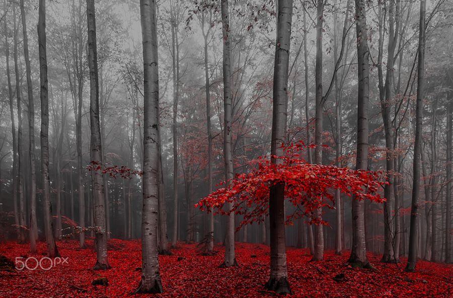 El color de la naturaleza 3