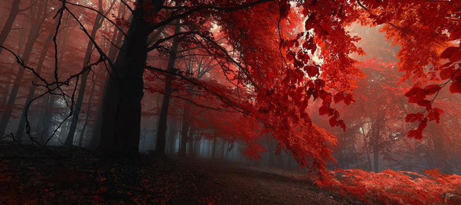 El color de la naturaleza