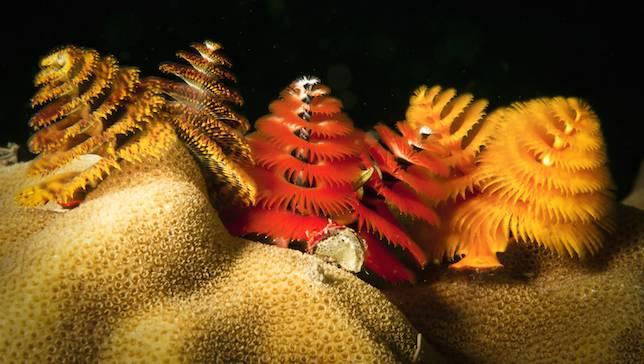 Navidad bajo el mar 2