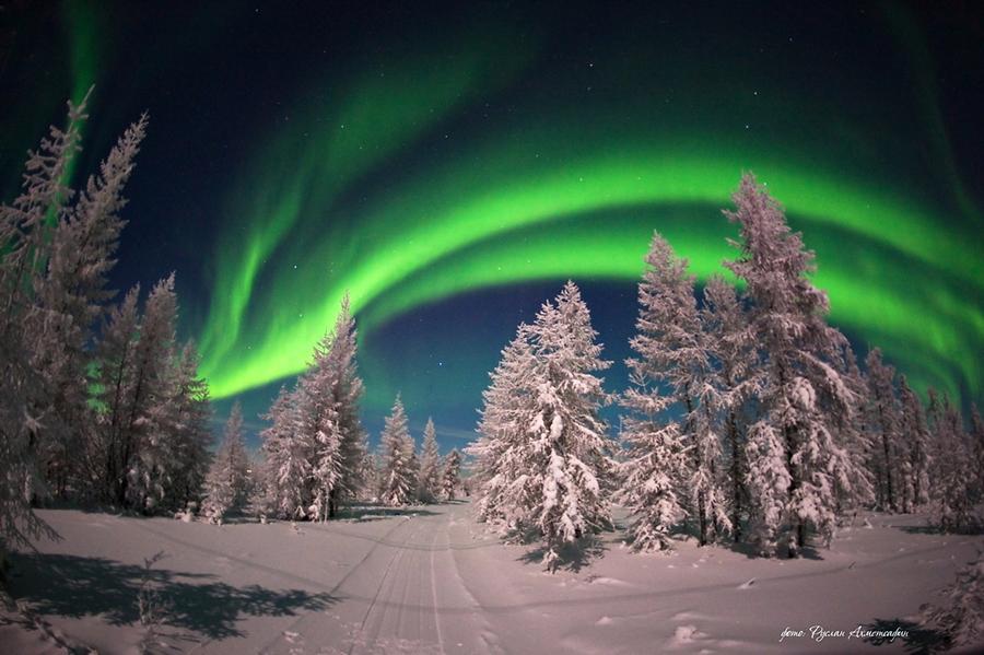Auroras en un paisaje congelado 1
