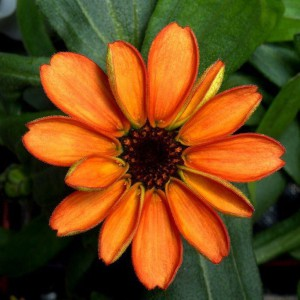 Flor en el espacio 2