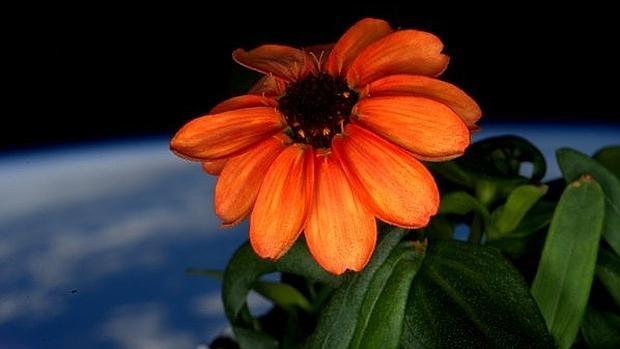 Flor en el espacio 4