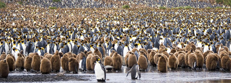 Pinguinos portada