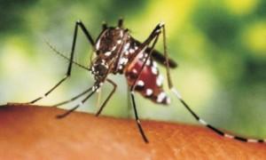 mosquito-zika