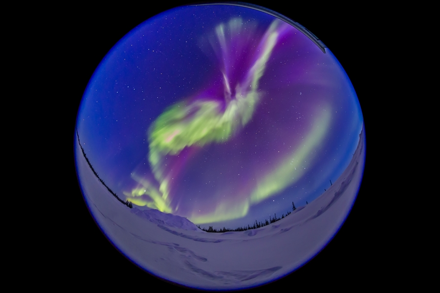 The great aurora display of March 6, 2016 when the sky was filled with curtains right at twilight. Green and magenta curtains of Northern Lights dance in the blue twilight. The Big Dipper is at left, the Pleiades at right. Taken as part of a time-lapse sequence at the Churchill Northern Studies Centre, for projection in digital planetariums.