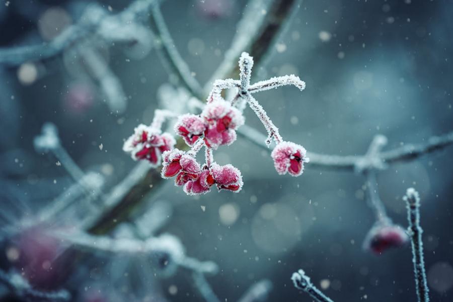 Naturaleza en el frio 3