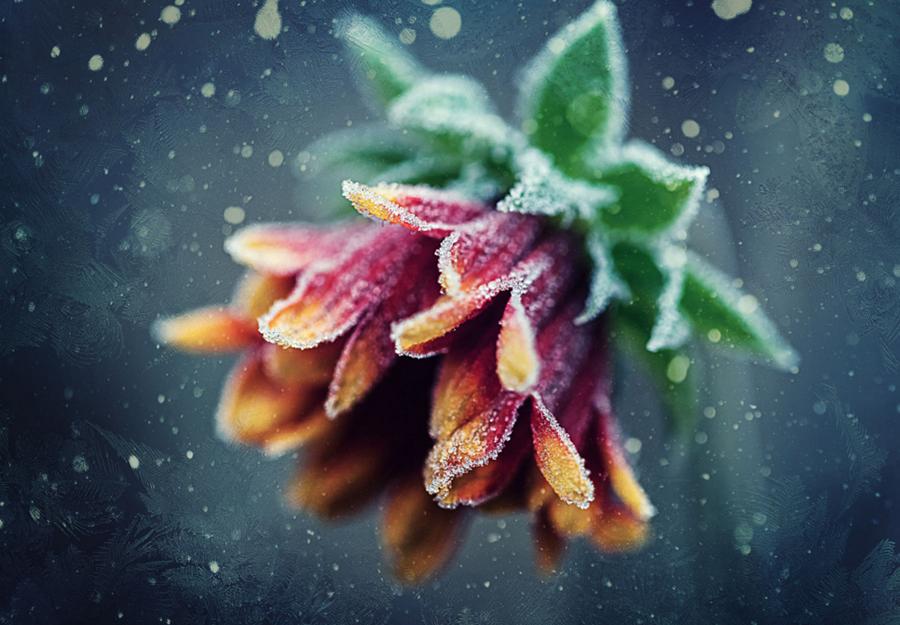 Naturaleza en el frio 5