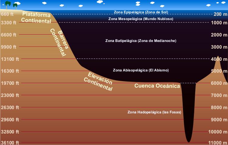 Zonas y capas del oceano