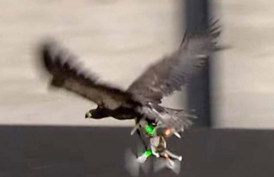 Aves y Drones
