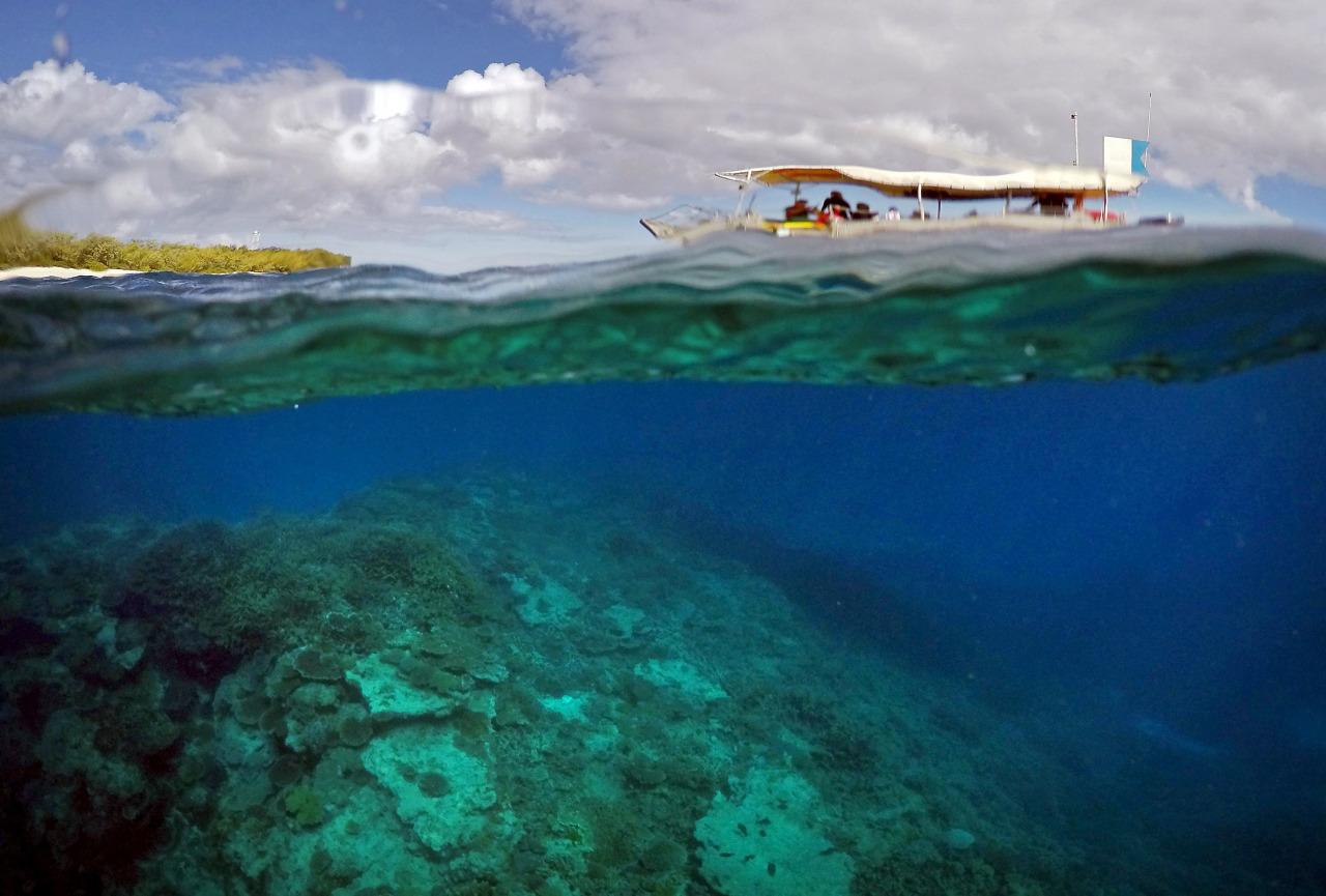 Barrera de Coral pierde su color 2