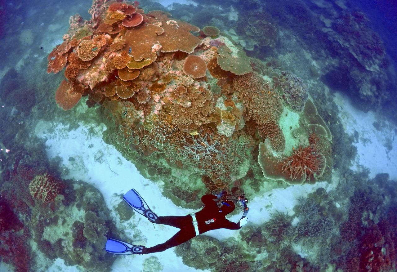 Barrera de Coral pierde su color 3