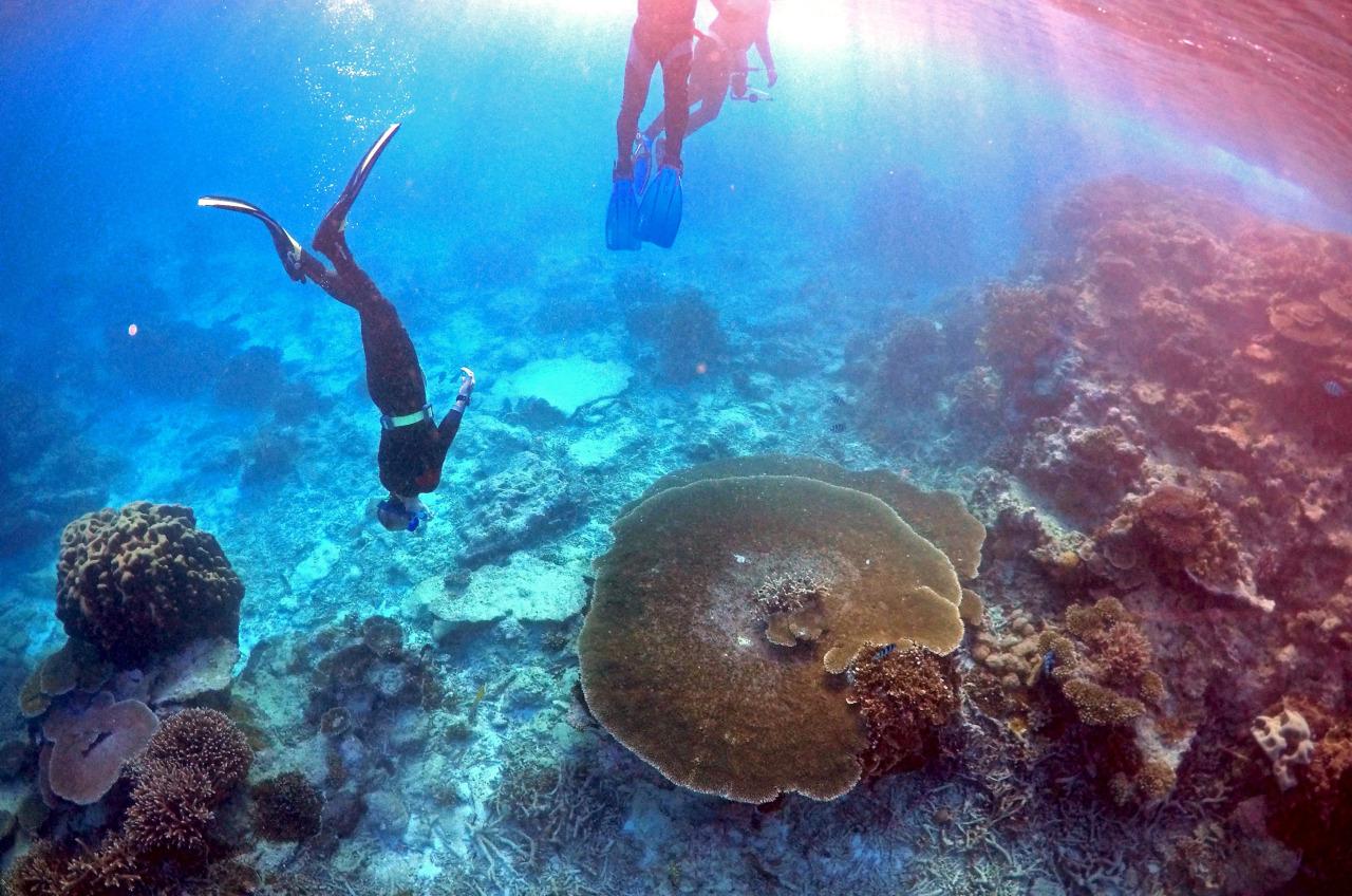 Barrera de Coral pierde su color