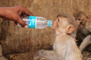 Ola de Calor en India 2