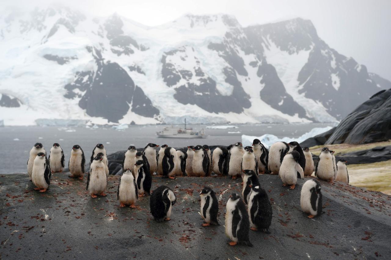 Pinguiinos amenazados por falta de alimento en la Antartida 3