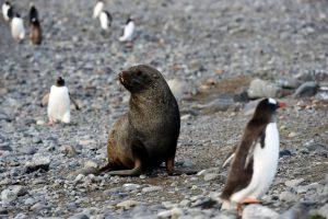 Pinguiinos amenazados por falta de alimento en la Antartida 4