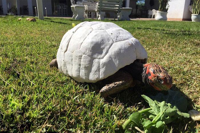 Freddy la tortuga