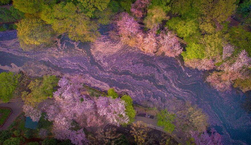 Lago pintado por flores de cerezo 2