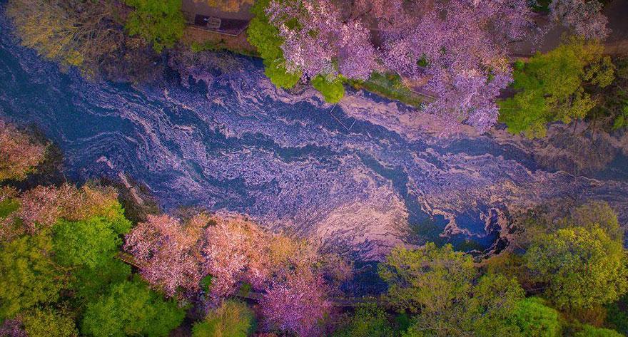Lago pintado por flores de cerezo 3