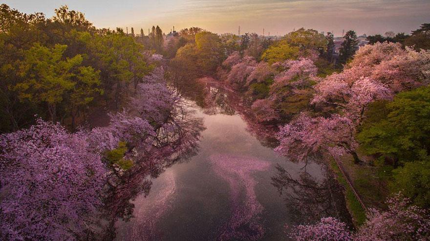 Lago pintado por flores de cerezo 4