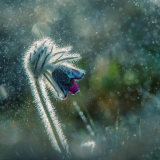 Macro flores 2