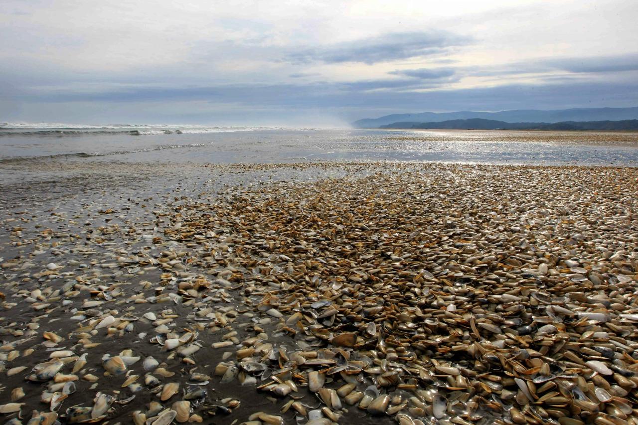 Marea Roja En Chile 3