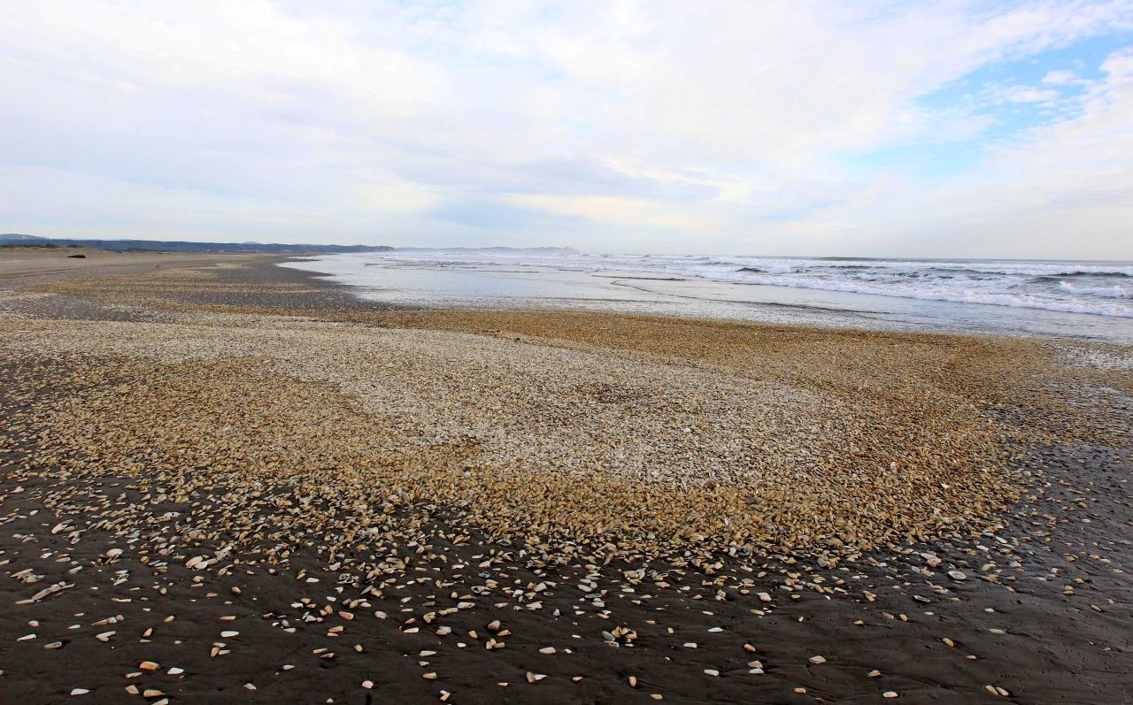 Marea Roja En Chile 4