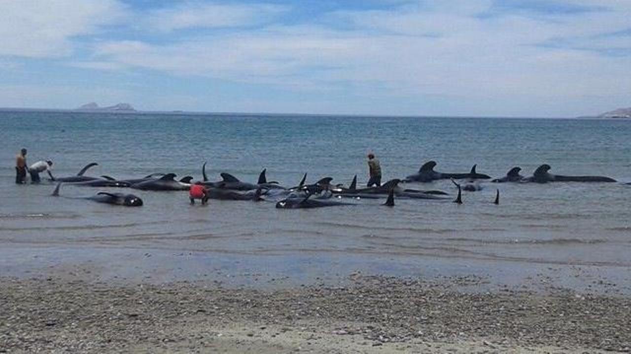 Mueren ballenas en Mexico