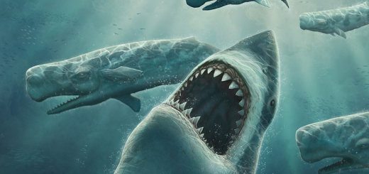 Tiburon atacado por ballenas