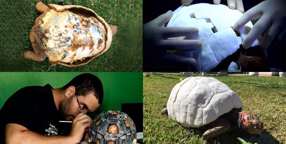 tortuga-caparazon