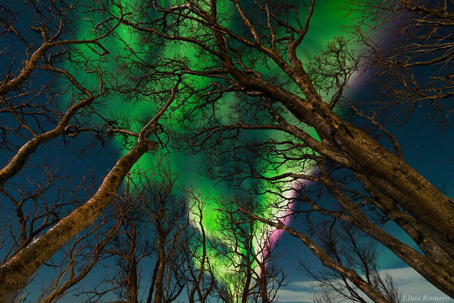 La noche, el bosque y la aurora boreal