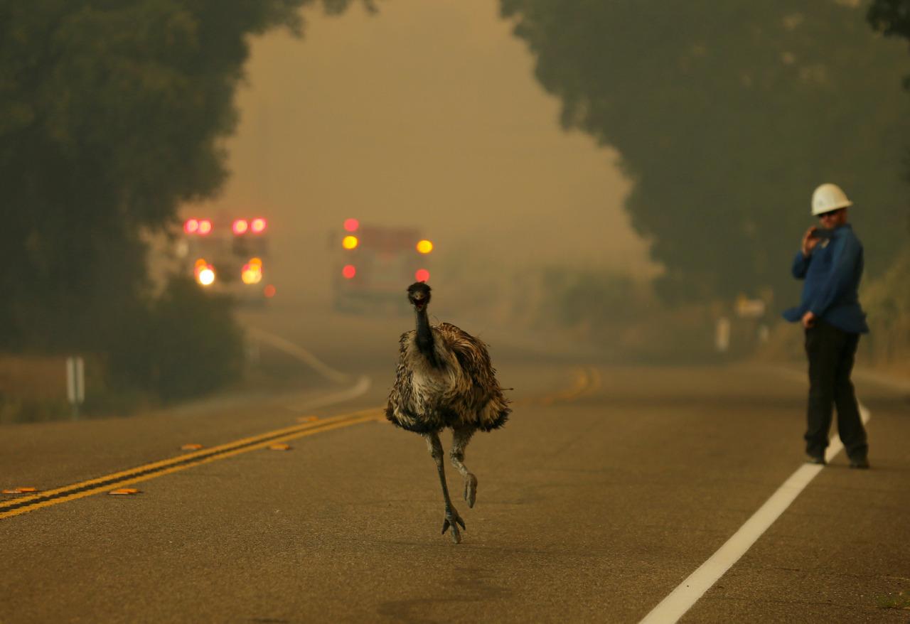 Incendio en california 4