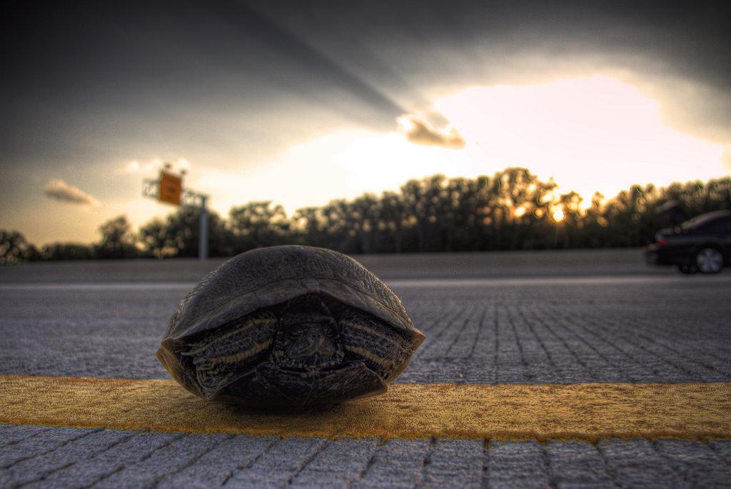 Caparazon de tortugas 4
