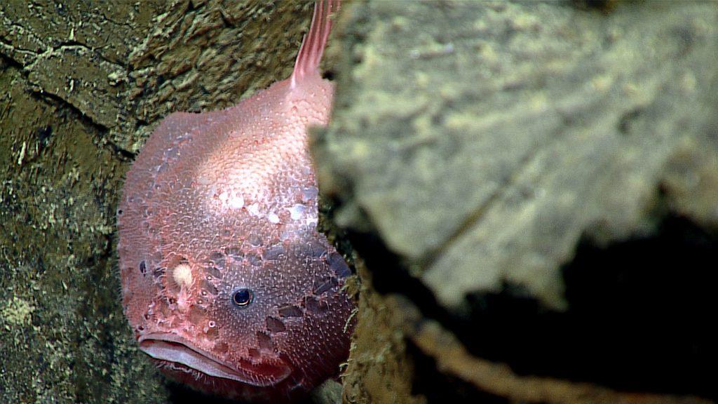 Criaturas de las profundidades 10