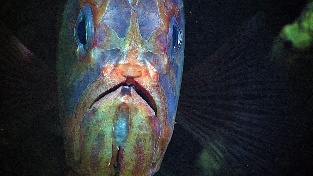 Criaturas de las profundidades 12