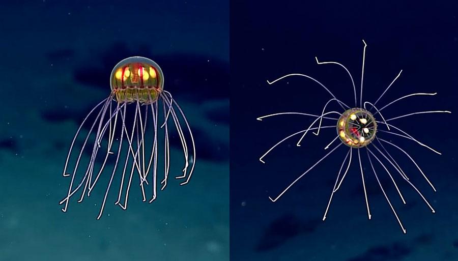 Criaturas de las profundidades 4