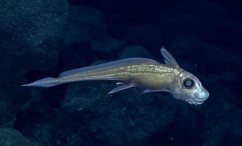 Criaturas de las profundidades 6