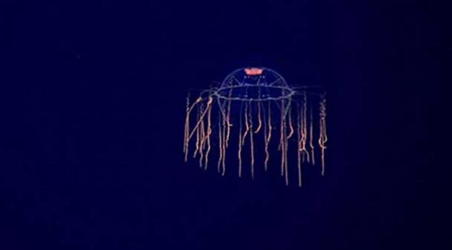 Criaturas de las profundidades 7