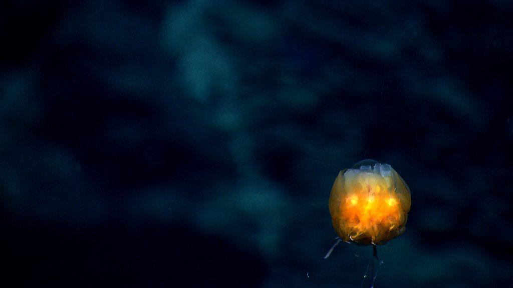 Criaturas de las profundidades 8