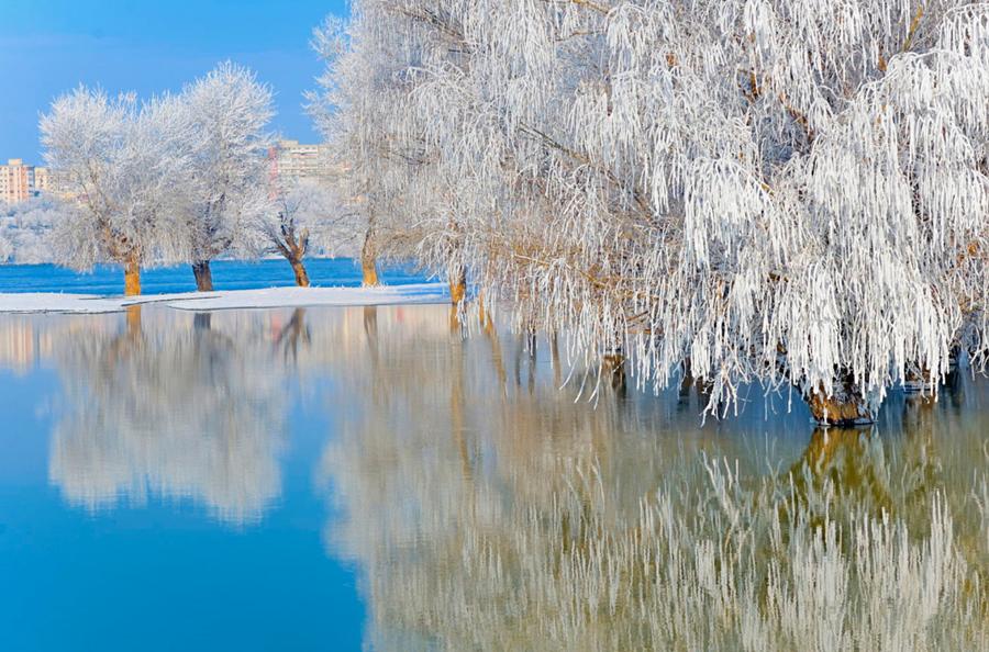El 'algo' mágico de la nieve y los árboles: los curiosos catalizadores naturales