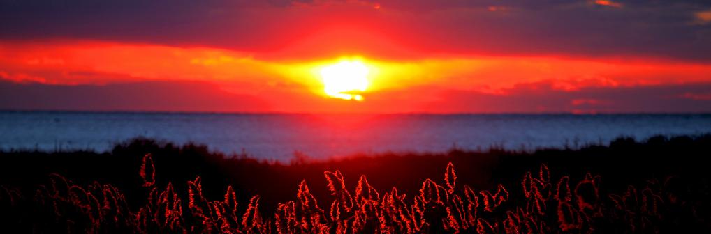 Prese campo con sol