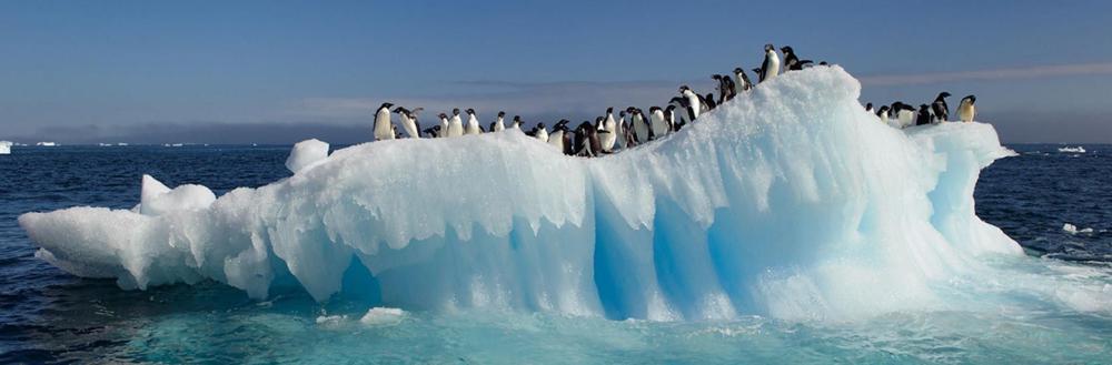 Prese hielo artico