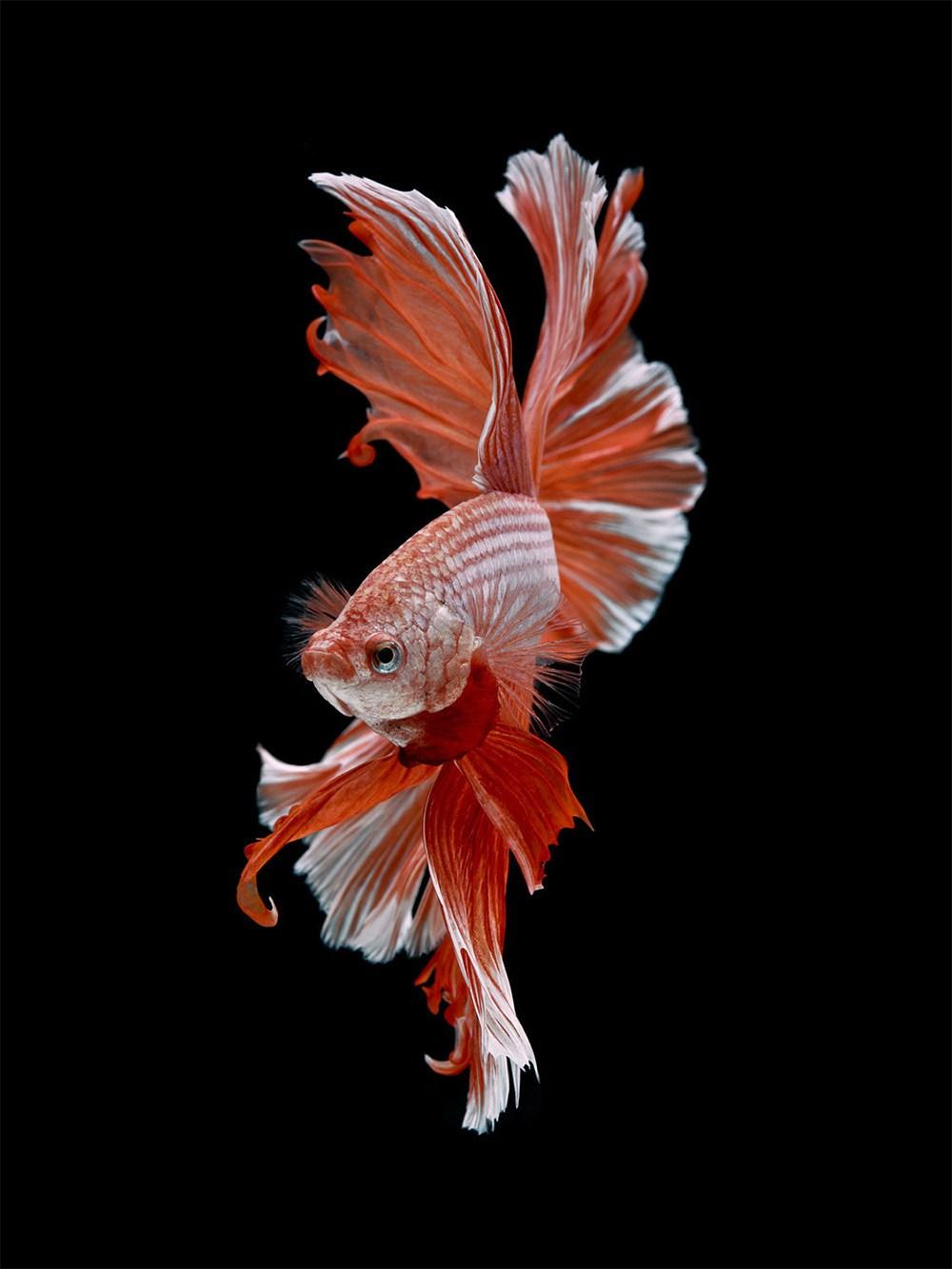peces-Visarute-Angkatavanich-10